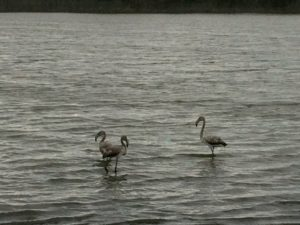 img_5659-flamingo-1